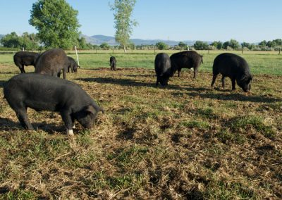 Black Cat Farm in Boulder, CO. © Rich Clarkson and Associates, LLC